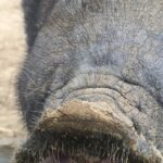Das Foto zeigt die Schnauze eines Tieres